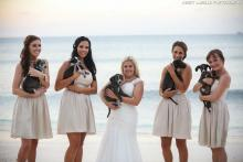 Aruba's Animal Ops for Great Wedding Shots, Aruba, Beach, Destination wedding, Caribbean wedding, Travel