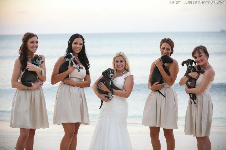 Aruba's Animal Ops for Great Wedding Shots, Aruba, Beach, Destination wedding, Caribbean wedding, Travel