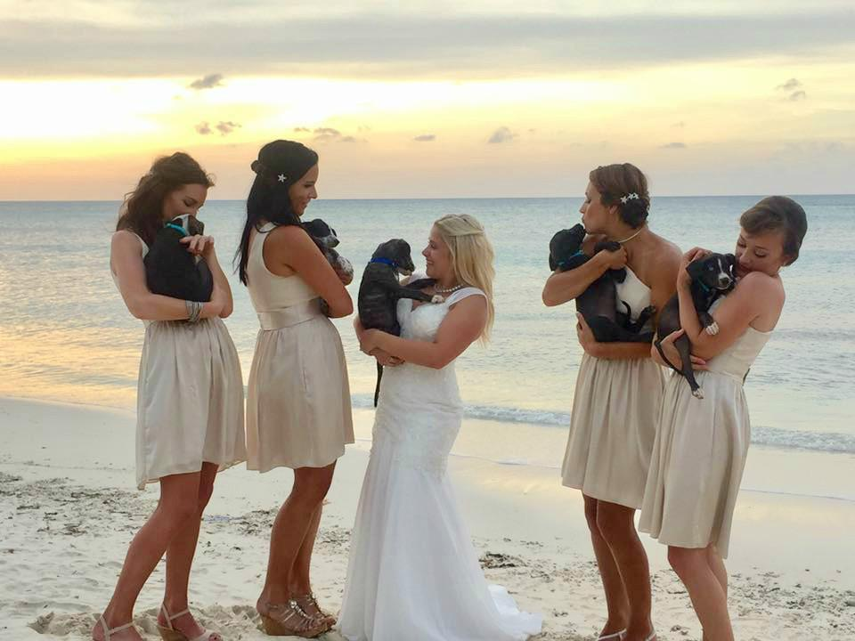 Aruba Destination Wedding   Beach Brides   And they called it puppy love... real wedding story
