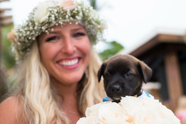 Aruba weddings, aruba animal rescue, aruba animal shelter, wedding photography, destination wedding, one happy island